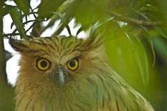 Animali/fauna selvatica Fotografia Stock