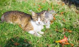 Animali, gatti, uccelli, bestiame Fotografia Stock Libera da Diritti