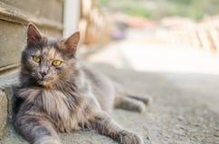 Animali, gatti, uccelli, bestiame Immagine Stock Libera da Diritti