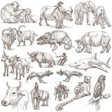 Animali intorno al mondo - un pacchetto disegnato a mano illustrazione vettoriale