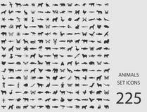 Animali messi delle icone piane Illustrazione di vettore Illustrazione di Stock