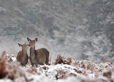 Animali in natura Immagini Stock