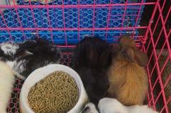 Animali nel mercato dell'animale domestico, gatti, conigli, ecc immagini stock