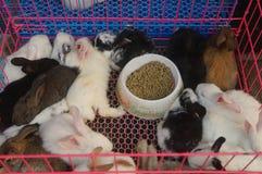 Animali nel mercato dell'animale domestico, gatti, conigli, ecc fotografia stock