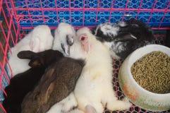 Animali nel mercato dell'animale domestico, gatti, conigli, ecc fotografia stock libera da diritti