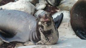Animali nel selvaggio Immagine Stock Libera da Diritti