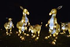 Animali nella notte del Jardin des Plantes fotografia stock libera da diritti