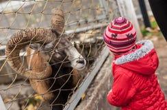 Animali nello zoo Fotografie Stock