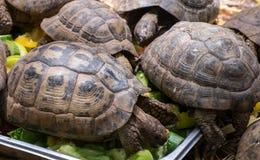 Animali sani di cibo Immagini Stock Libere da Diritti