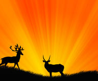 Animali selvatici Fotografie Stock Libere da Diritti