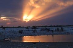 Animali selvatici al foro di acqua vicino al parco nazionale di etosha del campo di okaukuejo Immagine Stock Libera da Diritti