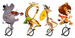 Animali selvatici divertenti sui monocicli Fotografie Stock
