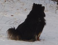 Animali simili a pelliccia di macchia del cane in alberi Fotografie Stock