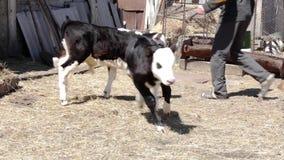 Animali su un'azienda agricola archivi video