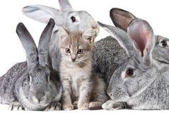 Animali svegli Fotografie Stock Libere da Diritti