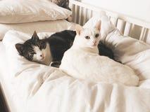 Animali svegli dell'animale domestico del gatto dei gatti fotografia stock libera da diritti