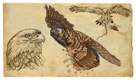 Animali, tema: RAPACI - pacchetto disegnato a mano di vettore Immagini Stock