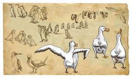 Animali, tema: UCCELLI mare e (dell'ACQUA) - vector il pacchetto Fotografie Stock Libere da Diritti