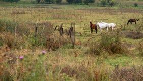 Animali, uccelli, bestiame Immagine Stock