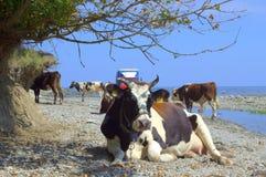 Animali vacationing della spiaggia di estate Fotografia Stock Libera da Diritti