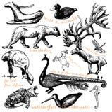 Animals Royalty Free Stock Photo