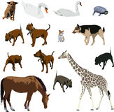 Animals Stock Image