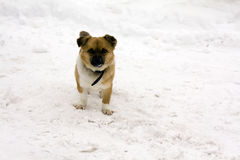 Animals. Small puppy on a snow-covered field Royalty Free Stock Photos