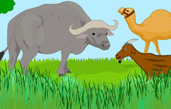 Animals. Illustration of a farm with animals Stock Images