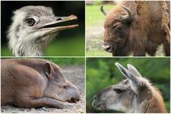 Animals Stock Image