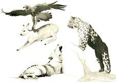 Animals Royalty Free Stock Image