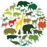 Animals. Set of various animal silhouettes Royalty Free Stock Images