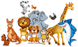 Free Animals Stock Images - 43864034