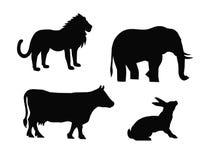 Animals Stock Photos