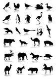 Animals. Vector file. Illustration image vector illustration