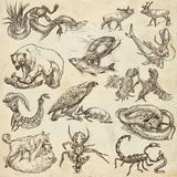 Animals in action, Predators - An hand drawn full sized illustra Royalty Free Stock Image