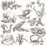 Animals in action, Predators - An hand drawn full sized illustra Royalty Free Stock Photo