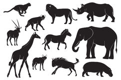 Animals of Africa. The figure shows the animals of Africa Stock Image