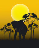 Animals Of Africa Royalty Free Stock Images
