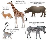 Animals of Africa: giraffe, rhino, zebra, lemur, fennec. Collection of animals living in the territory of Africa: northern giraffe, black rhinoceros, Grevy`s royalty free illustration
