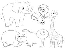 Animals of Africa object coloring vector for adults Royalty Free Stock Photo