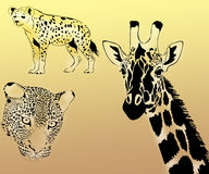 Animals of Africa portraits Royalty Free Stock Photos