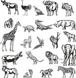 Animals of the African continent. Vector and raster drawings of 22 different animals of the African continent royalty free illustration