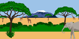 Animals in african scenery. Illustration of a Giraffes and elephant in African scenery with mount Kilimanjaro in the background Stock Photography