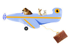Animals on air travel stock photo