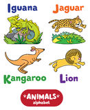 Animals alphabet or ABC. Children vector illustration of funny iguana, jaguar, kangaroo and lion.  Animals zoo alphabet or ABC Stock Images