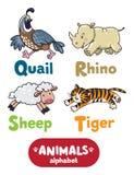 Animals alphabet or ABC. Children vector illustration of funny quail, rhino, sheep and tiger.  Animals zoo alphabet or ABC Stock Image