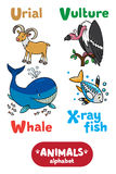 Animals alphabet or ABC. Children vector illustration of funny urial, vulture, whale and x-ray fish. Animals zoo alphabet or ABC Vector Illustration