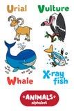 Animals alphabet or ABC. Stock Photo