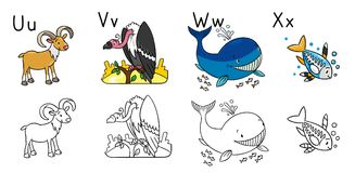 Animals alphabet or ABC. Coloring book. Coloring book or coloring picture of funny urial, vulture, whale and x-ray fish. Animals zoo alphabet or ABC Royalty Free Illustration