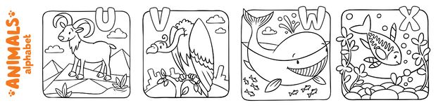 Animals alphabet or ABC. Coloring book set. Coloring book or coloring picture of funny urial, vulture, whale and x-ray fish. Animals zoo alphabet or ABC royalty free illustration